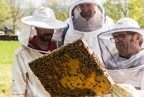 Stages d'apiculture